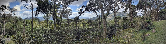 beautiful views of mountains, Nicaragua Selva Negra coffee estate