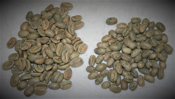"""flat beans"" v. ""peaberries"""
